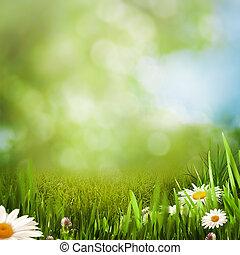 été, pré, naturel, arrière-plans, pâquerette, fleurs