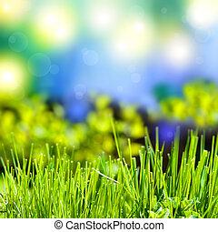 Été, résumé, herbe, fond