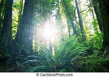 été, rainforest