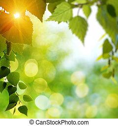 été, rayons, forêt, bouleau, soleil, brindille, jour