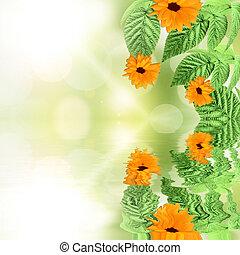 été, reflété, eau, vert, backgroundwith, fleurs