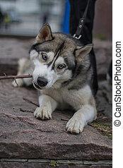 été, rue, chien, jour