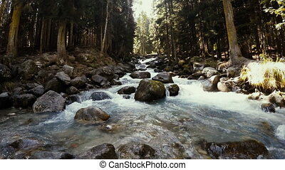 été, ruisseau, eau, forêt verte, écoulement, par