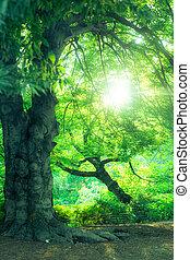 été, scène, arbres, nature