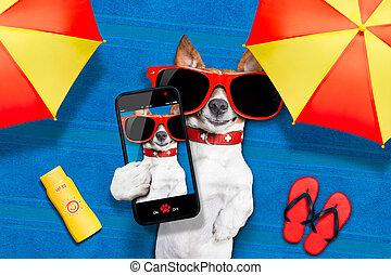 été, selfie, plage, chien