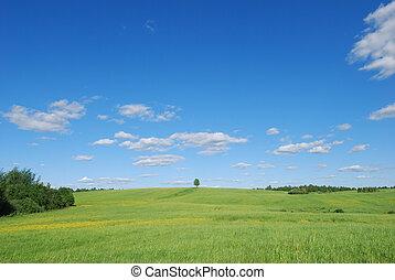 été, solitaire, arbre, -, champ, paysage vert