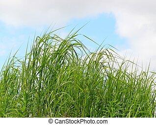 été, souffler, herbe