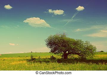 été, style, arbre, -, retro, vendange, paysage