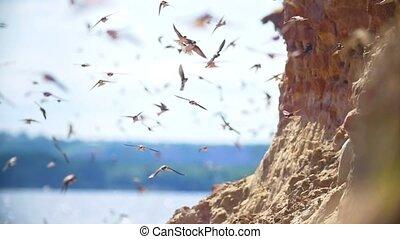 été, sur, voler, jour, grand, troupeau, rivière, oiseaux, falaise
