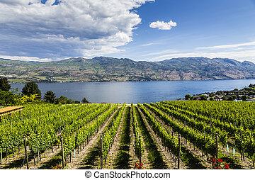 établissement vinicole, été, vue