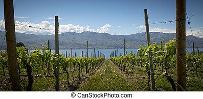 établissement vinicole, vue