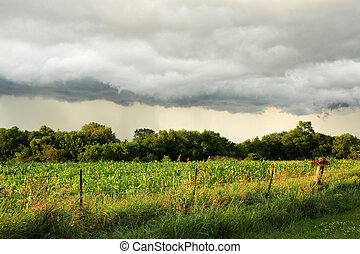 étagère, sur, champ, américain, orage, arcus, midwest, maïs...