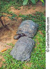 étang, énorme, parc, tortue, reposer