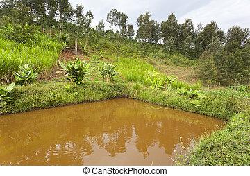 étang, fish, kenyan