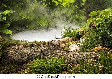 étang, forêt, fumée