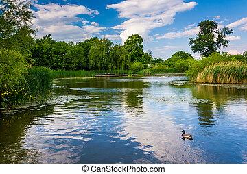étang, maryland., baltimore, patterson, parc