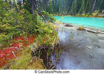 étang, parc national, yoho