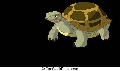 étapes, peu, tortue, prend, compagnon, alpha, marais, grand