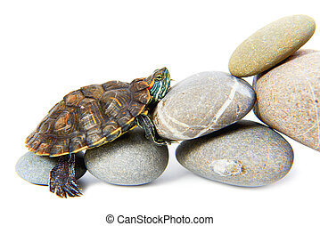 étapes, tortue, haut, escalade