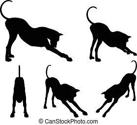 étendue, pose, silhouette, chien