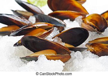 éti kagylók, képben látható, jég