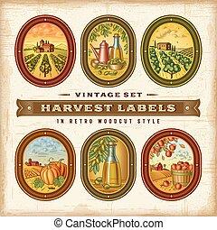 étiquettes, vendange, ensemble, récolte, coloré