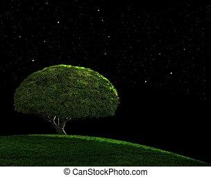 étoilé, nuit
