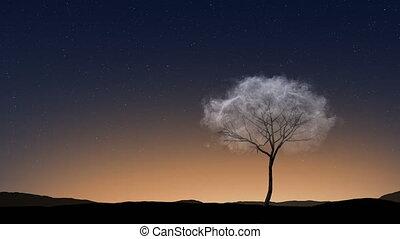 étoilé, solitude, nuage, arbre, ciel, liberté, loop.4k, independence., seamless, fond, sunset., haut, solitaire, fin