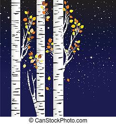 étoilé, sur, nuit, arbres, automne, bouleau