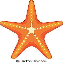 étoile, mer, etoile mer, fond, antilles, blanc