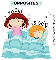 éveillé, endormi, mots, opposé