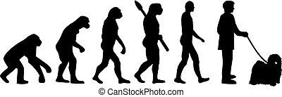évolution, darwin, puli