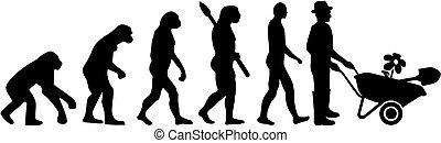 évolution, mâle, jardinier