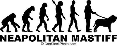 évolution, mot, neapolitan, mastiff