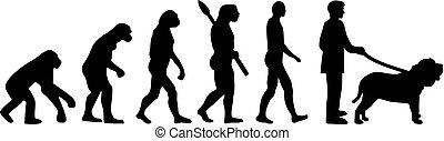 évolution, neapolitan, mastiff