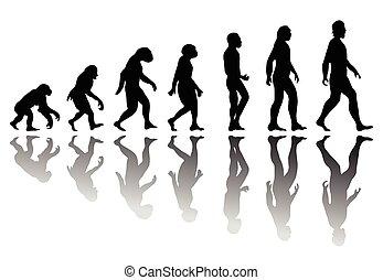 évolution, silhouette, homme
