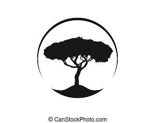 ícone, pinho, pinus, pinea, árvore, mediterrâneo, vetorial