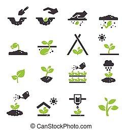 ícone, planta