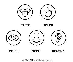 ícones, linha, boca, toque, cinco, visão, tongue., ouvindo, sentidos, nariz, vetorial, cheiro, mão, jogo, olho humano, gosto, orelha