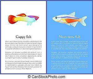 ícones, tetra, peixe, néon, isolado, branca, guppy