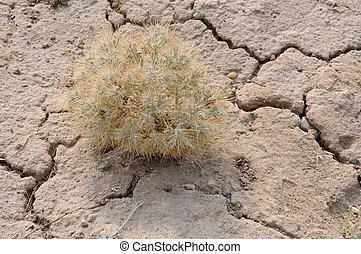 íon, espinho, planta, pedregoso, solo