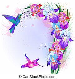 íris, flores, vetorial, cartão, hummingbird