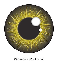íris, jogo, olho, isolado, realístico, vetorial, experiência verde, desenho, branca
