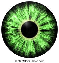 íris, olho, tirado, isolado, ilustração, verde, eye.