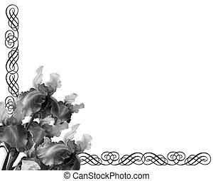 íris, ornamental, borda, preto branco