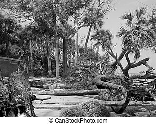 île, après, ouragan, chasse
