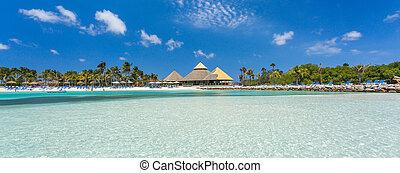 île, aruba, flamant rose, plage
