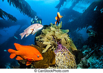 île, catalina, plongée sous-marine