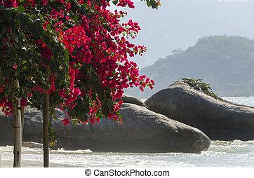 île, fleurs, chauve
