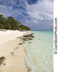 île, héron, scène plage